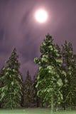 Claro de luna norteño del bosque del invierno fotografía de archivo libre de regalías