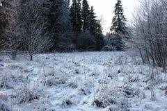 Claro de madera en el invierno Foto de archivo libre de regalías