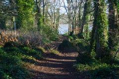 Claro del arbolado con una trayectoria que lleva al lago en Portavoe cerca del condado abajo Irlanda de Groomsport Fotos de archivo