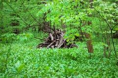Claro del bosque imagen de archivo