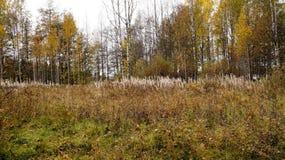 Claro del bosque Foto de archivo libre de regalías