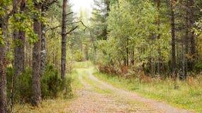 Claro del bosque Imagenes de archivo