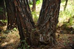 Claro del bosque Foto de archivo