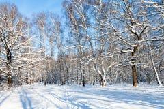 claro del bosque en día de invierno soleado Imágenes de archivo libres de regalías