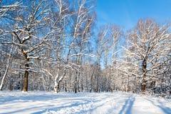 claro del bosque en día de invierno soleado Fotos de archivo