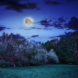 Claro del bosque en la sombra de los árboles en la noche Fotografía de archivo
