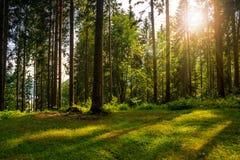 Claro del bosque en la sombra de los árboles en luz del sol Fotografía de archivo