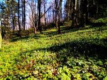 Claro del bosque en las montañas Foto de archivo