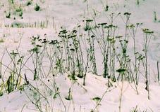 Claro del invierno con nieve imagen de archivo libre de regalías