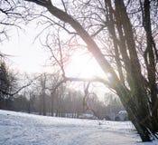 Claro del invierno en el parque en el sol Paisaje del invierno Fotos de archivo libres de regalías
