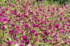 Claro del trébol en el jardín botánico cerca de Batumi, Georgia Fotos de archivo