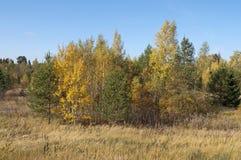 Claro en bosque del otoño Imagen de archivo