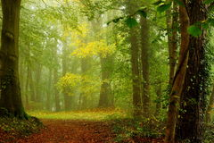 Claro en el bosque por una mañana del otoño con niebla Imagenes de archivo
