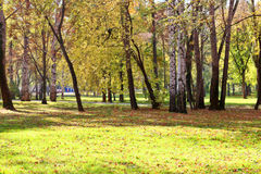 Claro en parque entre las hojas amarillas Fotos de archivo libres de regalías