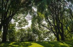 Claro entre los árboles Foto de archivo