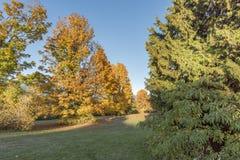 Claro entre los árboles con la hierba verde y las hojas rojas caidas Fotos de archivo