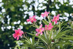 Claro - flores cor-de-rosa no vale imagens de stock royalty free