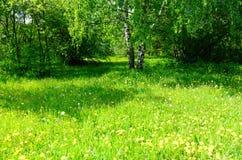 Claro herboso verde con los árboles en el fondo Imagenes de archivo