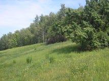 Claro montañoso verde del verano imagen de archivo