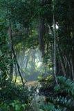 Claro tropical del bosque de la selva Fotografía de archivo