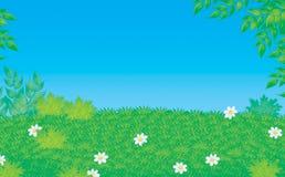 Claro verde Imagen de archivo libre de regalías
