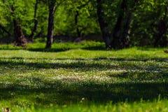 Claro verde Foto de archivo