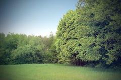 Claro verde en el bosque Fotos de archivo
