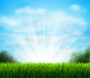 Claro verde fresco con la hierba Sazone el fondo con el cielo azul, la sol y nubes mullidas blancas Foto de archivo
