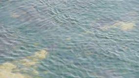 Claro y ondulación transparente de la bahía de la repulsión, alga marina, algas, lago chispeante, grava metrajes