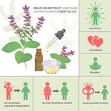Clary sage Essential Oil Benefits Stock Photography