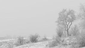 Clase de árbol en un día de invierno de niebla Cubrieron a Frost las ramas con el foco suave de la escarcha Foto de archivo libre de regalías