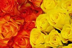 Clase dos de rosas Imágenes de archivo libres de regalías