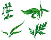 Clases de plantas Foto de archivo