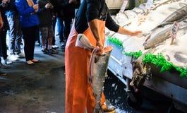 Clasificación de la exhibición de color salmón de los pescados Imágenes de archivo libres de regalías