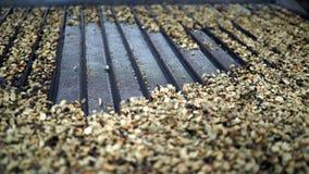 Clasificación de los granos de café Fotografía de archivo