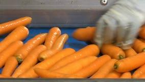 Clasificación de zanahorias metrajes