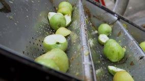 Clasificando manzanas en un transportador, preparando el zumo de manzana almacen de video