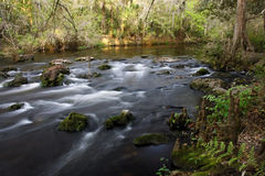 Class II Rapids on the Hillsborough River Royalty Free Stock Images
