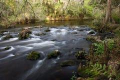 Class II Rapids on the Hillsborough River. The scenic Hillsborough River winds through a subtropical landscape, Hillsborough River State Park, Southwest Florida Royalty Free Stock Images