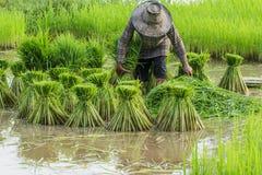 Classe contadina, agricoltori fotografia stock