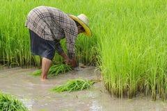 Classe contadina, agricoltori fotografie stock
