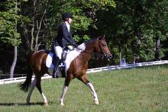 Classe equestre 2018 do principiante do parque de Queeny imagens de stock royalty free