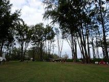 Classe extérieure de yoga parmi de grands arbres d'ironwood Photos stock