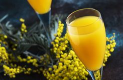 Classic alcohol cocktail mimosa with orange juice and cold dry champagne or sparkling wine in glasses, blue stone background with. Yellow flowers, copy space royalty free stock images