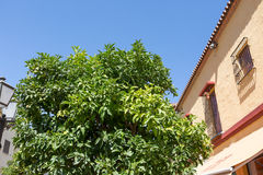 Classic Andalucian Spanish house and tree Royalty Free Stock Photos