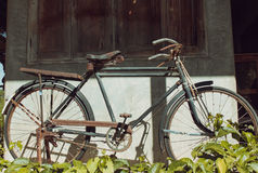 Classic antique bicycle on green grass in sunshine Royalty Free Stock Image