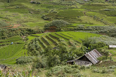 Classic asian rice field, sapa vietnam Royalty Free Stock Photo