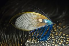 Classic Atlantic Salmon Fly. Classic, hand-tied full-dress salmon fishing fly Royalty Free Stock Images