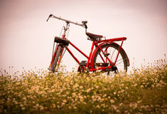 Classic bicycle. Classic bicycle standing in field of grass Stock Photography