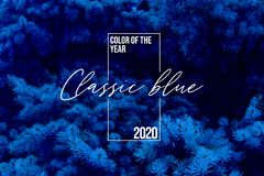 Classic blue spruce background with Color of the 2020 year, pantone pallette with classic blue swatch and winter fir